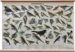 Serie - Thieme's wandplaten van vogels en zoogdieren